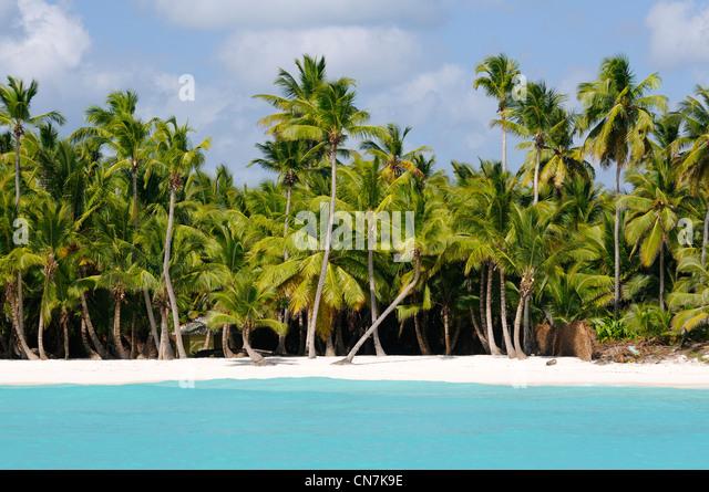 Dominican Republic, Samana peninsula, Del Este National Park, Saona Island, beach and coconut trees on the Saona - Stock Image