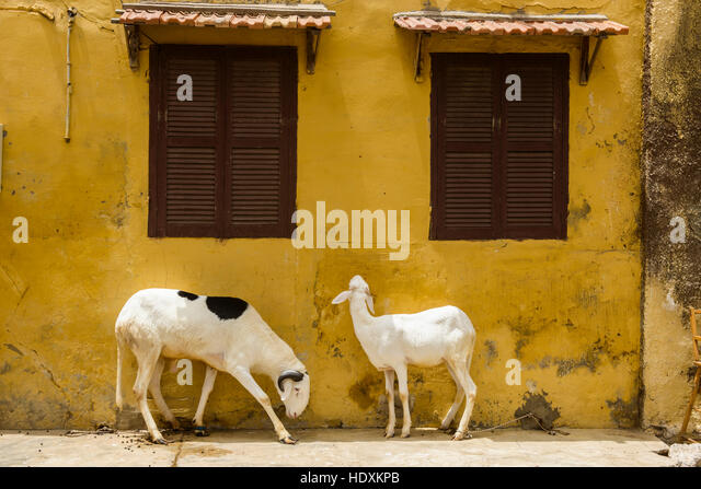 Streets of St, Louis, Senegal - Stock Image