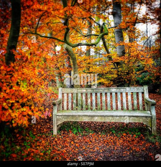 Autumn colours bench at Wandlebury Country Park, Cambridge, England - Stock Image