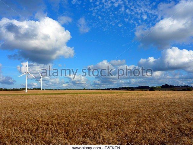 Two wind turbines in wheat field, Denmark - Stock Image