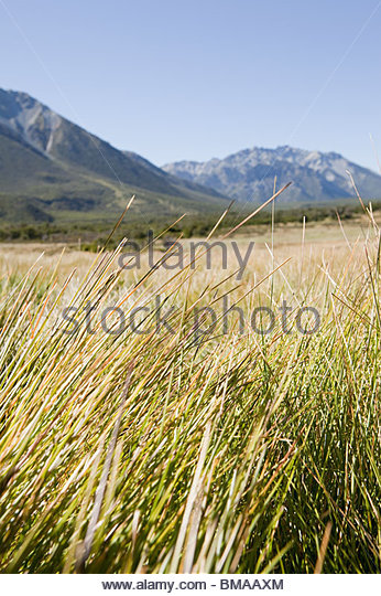 Peaceful rural landscape in argentina - Stock Image