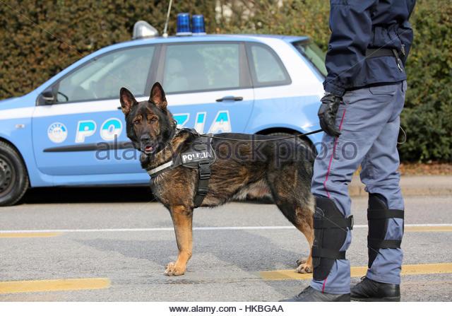 Protection Dog Training Tijuana