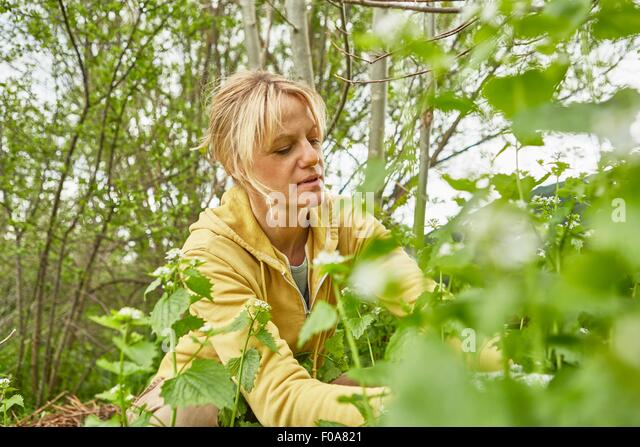 Mature woman, gardening, pulling up weeds - Stock Image