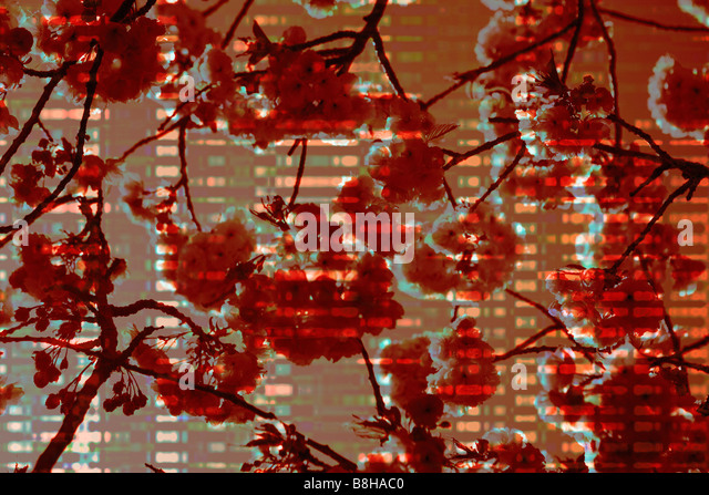 Graphic photo-illustration of spring blossom - Stock Image