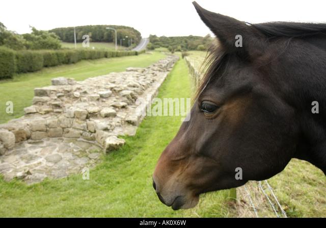 UK, England, Heddon on the Wall, Hadrians Wall, horse, - Stock Image