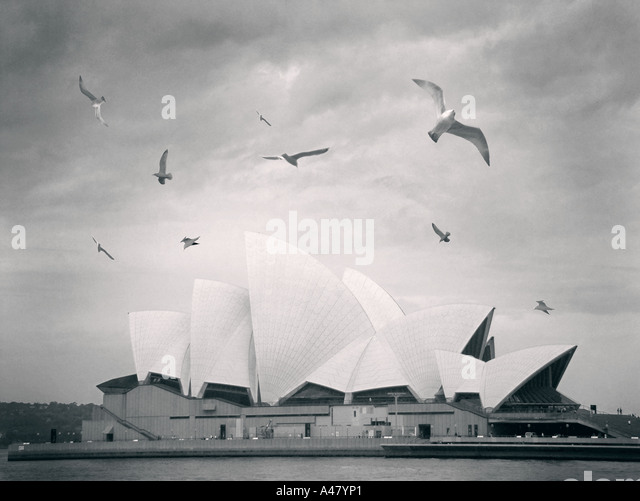 Sydney opera house, view across the harbor, with seagulls architecture, angled roof, glass, iconic shape, white - Stock Image