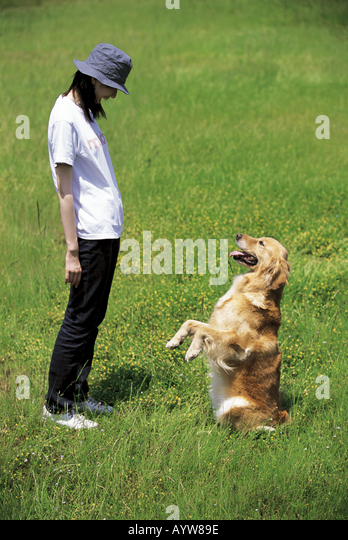 Woman with a dog in the meadow - Stock-Bilder