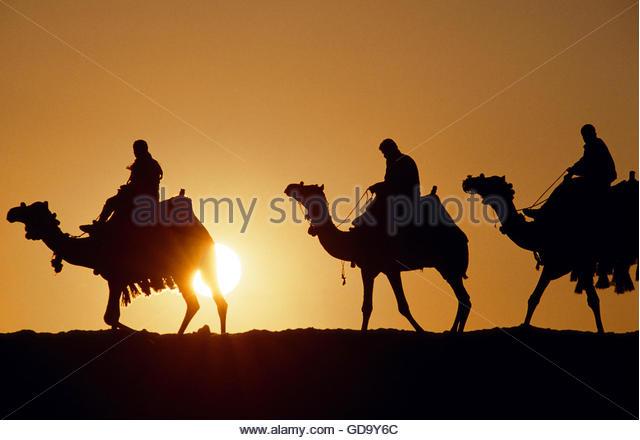 Egypt Camel Caravan at sunset - Stock-Bilder