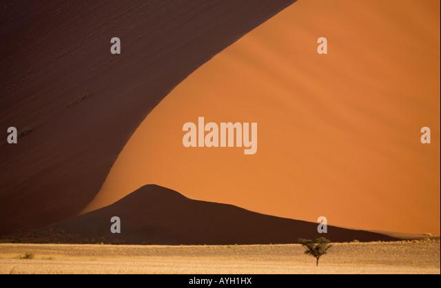 Tree in front of sand dune, Namib Desert, Namibia, Africa - Stock Image