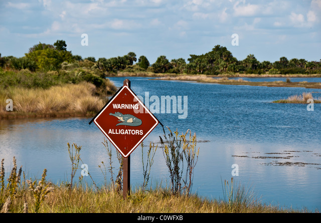Alligator warning sign with control spikes at pond St Marks National Wildlife Refuge - Stock Image