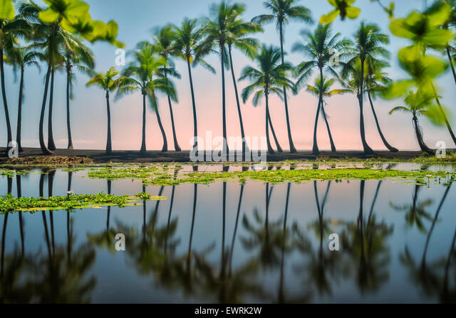 Palm reflections, Black Sand Beach. Hawaii, The Big Island - Stock Image