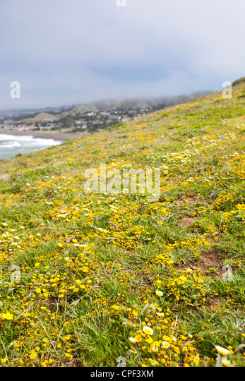 view of California hillside - Stock Image