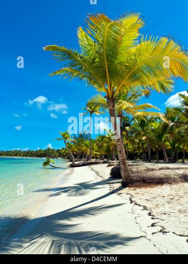 Palms at Playa Bavaro, Punta Cana, Dominican Republic, the Caribbean, America - Stock Image