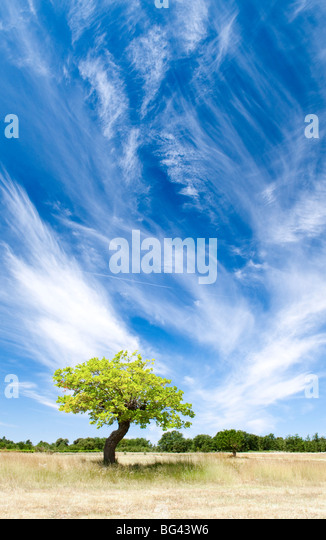 Tree and clouds, Provence, France - Stock-Bilder
