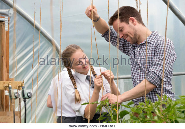 Teacher and schoolgirl learning gardening stringing plants in greenhouse - Stock-Bilder