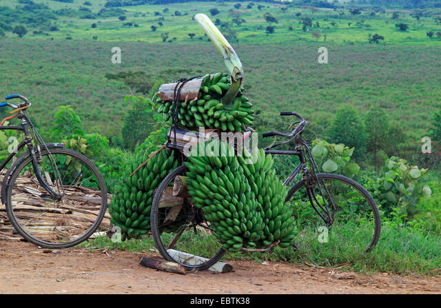 with bananas fully laden bike, Uganda - Stock Image