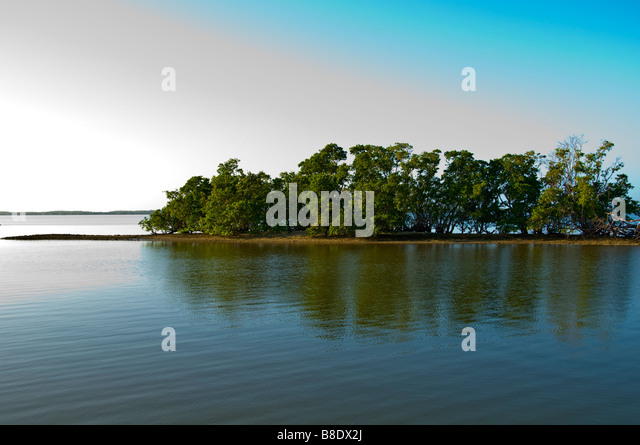 10 000 Islands mangrove island Everglades National Park Everglades City Florida - Stock Image