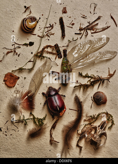 Insects and other elements from nature - Stock Image