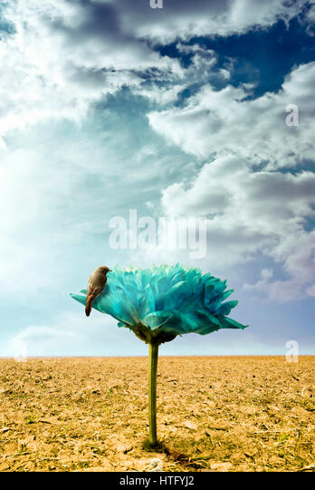 bird standing on a giant flower growing out of a dry ground, imagination and surreal concept - Stock Image