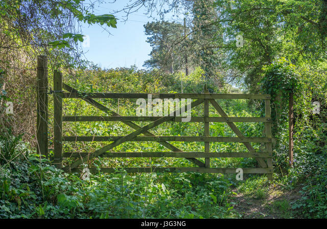 Wooden gate at entrance of an overgrown field / plot of land. - Stock Image