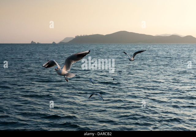 Gulls of various species flying over sea near Haeundae, Busan with Oryukdo islands on the background. - Stock Image