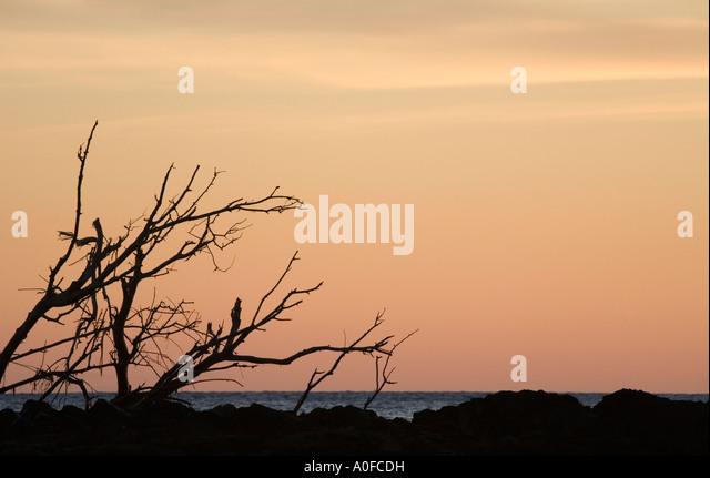 Mediterranean sunset Mediterranean sea ocean water sunset dusk drift wood driftwood tree branches twigs vertical - Stock Image