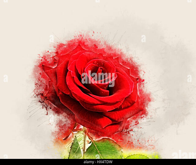 Image of red rose with grunge effect - Stock Image