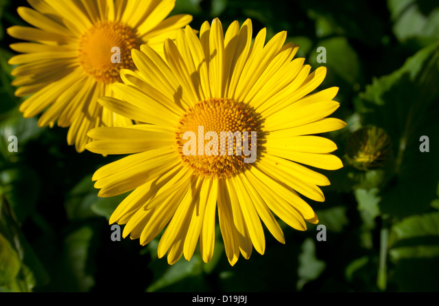Thrive With Stock Photos Amp Thrive With Stock Images Alamy