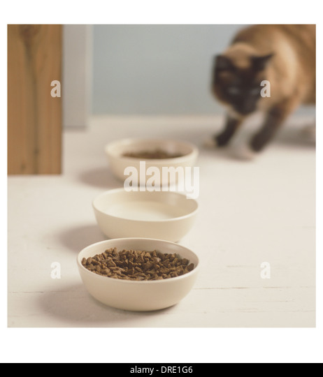 Cat getting ready to eat - Stock Image
