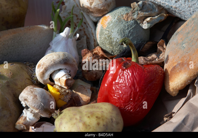 rotting wasted food thrown out by a household into the bin in the uk - Stock Image