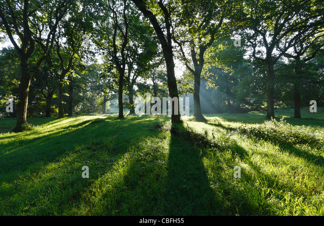 Oak Woodland at Castle Neroche. Blackdown Hills. Somerset. England. UK. - Stock Image