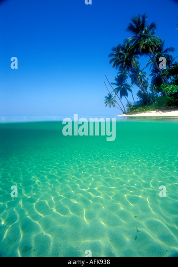 View of tropical beach from underwater in the Caribbean - Stock Image