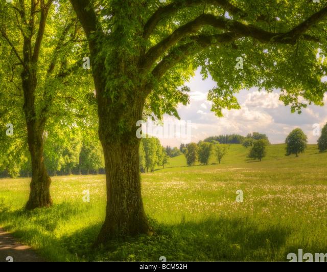 DE - BAVARIA: Summertime near Herrsching - Stock Image