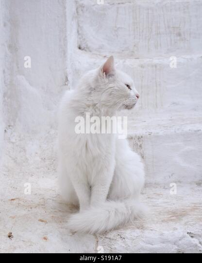 White cat sitting on a stair in Greece - Stock-Bilder