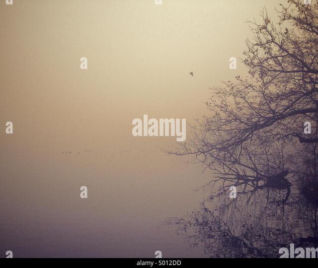 Foggy morning Over lake - Stock Image