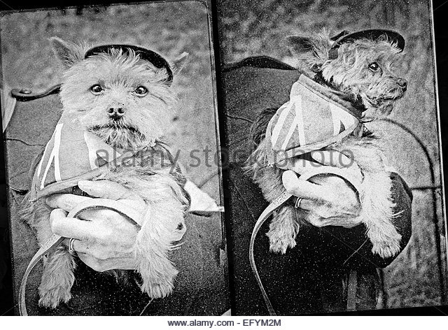 Patriotic dog mascot in WW2 style union jack outfit photographs - Stock Image