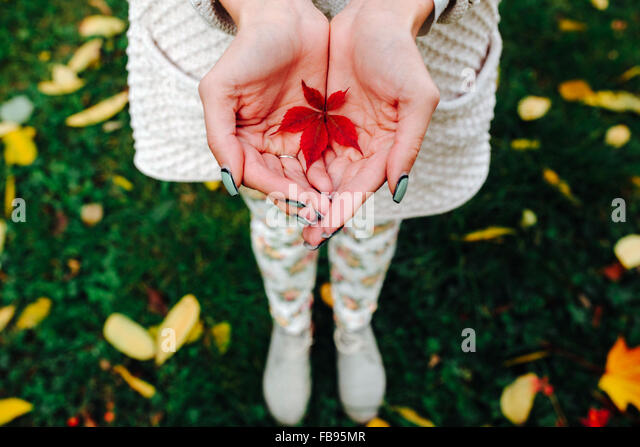 Autumn leaves in girl hands - Stock Image