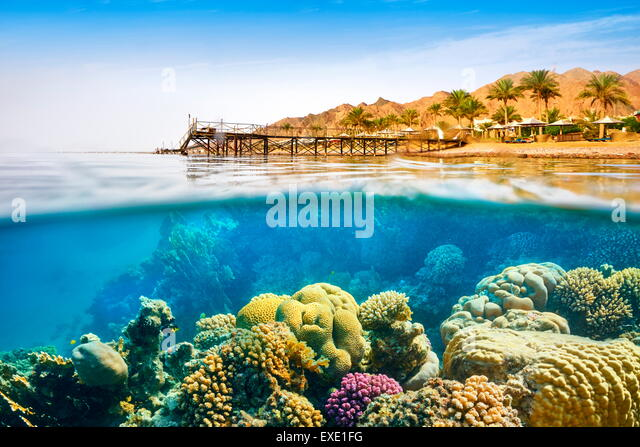 Underwater view, coral reef, Dahab, Red Sea, Egypt - Stock Image
