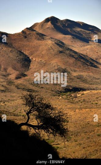 view to Naukluft Mountains, Namibia, Namib Naukluft National Park - Stock Image