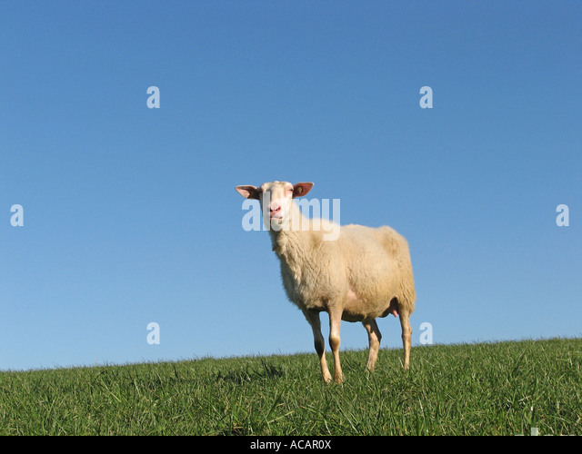 Single parter Schleswig Holstein