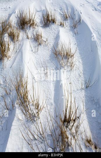 Reeds showing through wind blown snow in Glen Clunie, south of Braemar, Aberdeenshire, Scotland - Stock Image