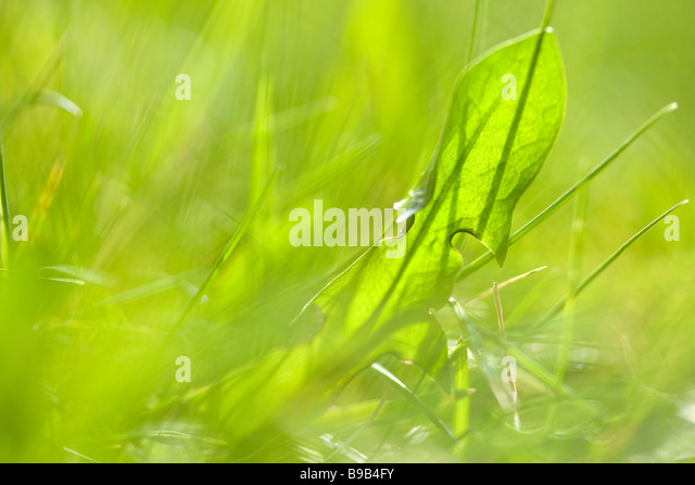 close up of summer grass dept of field - Stock Image