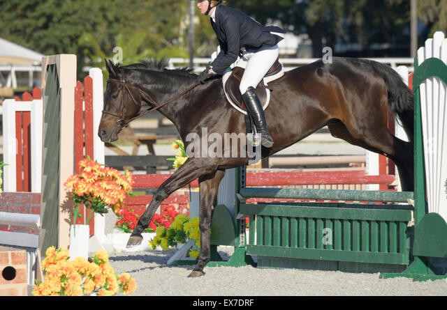 Female youth rider in show jumping competition - Stock Image