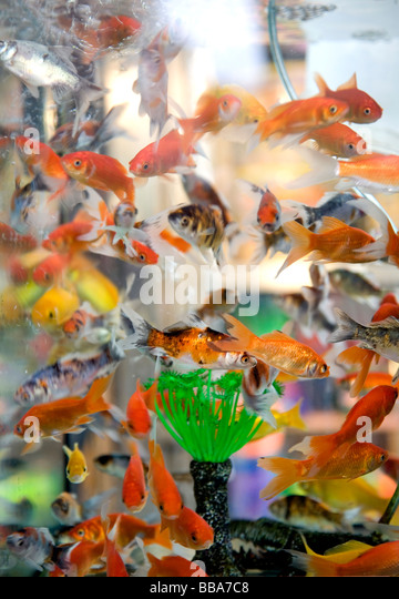 Fish For sale - Stock Image