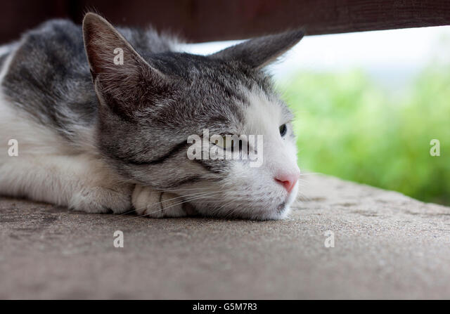 Nostalgic cat - Stock Image