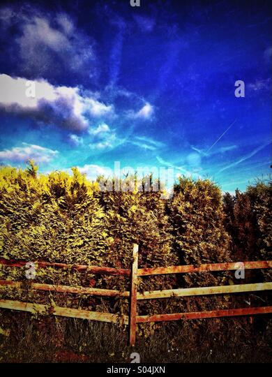 Fence hedge and blue sky abstract - Stock-Bilder