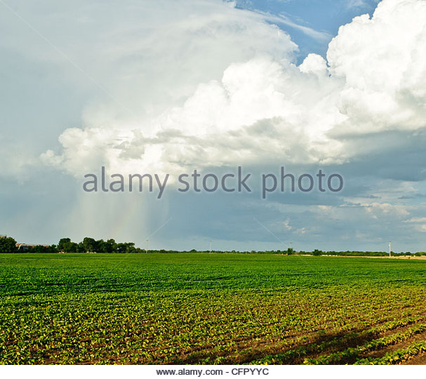 Small microburst storm over soybean filed, Rural Butler County Kansas, July 13, 2011 - Stock Image