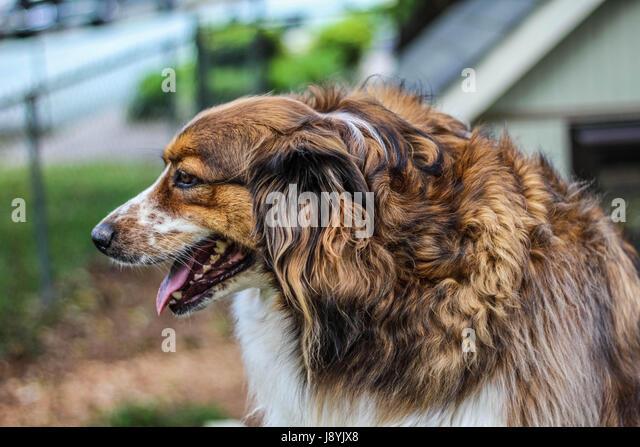 Dog Boarding Pleasant Garden Nc