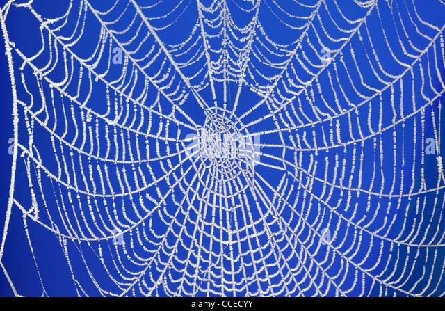 Frozen spider web - Stock Image