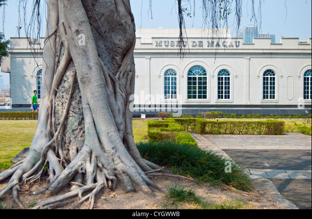 Macau Museum and Banyan Tree, Macau - Stock Image